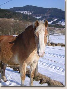 Biofeld-Haaranalysen Erfahrungen bei Pferden