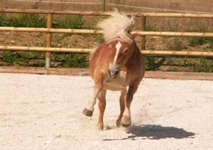 Kräuterfütterung bei Pferden