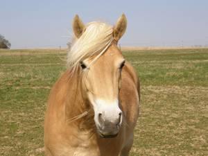 Pferdeschutz
