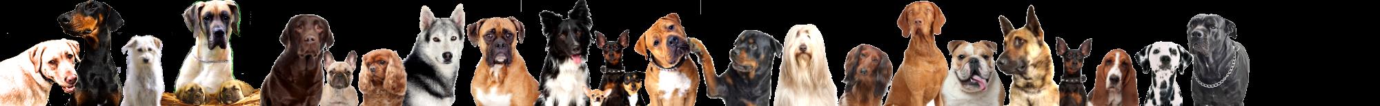 Tierheilpraxis erfahrungen bei Hunden