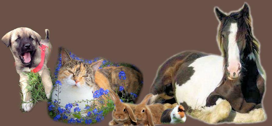 Homöopathie für Pferde, Hunde, Katzen, Kleintiere