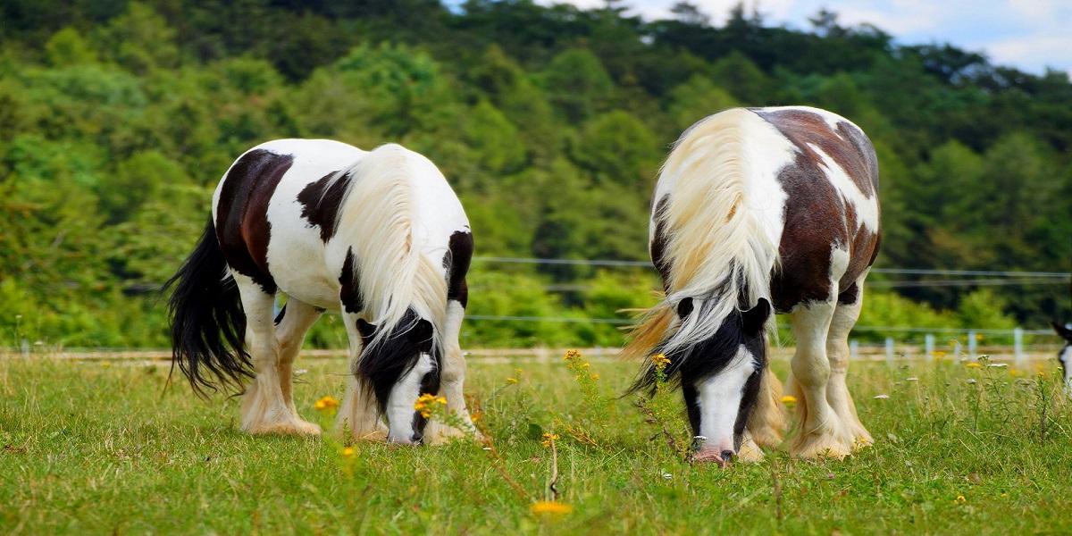 Pferden Kräuter füttern
