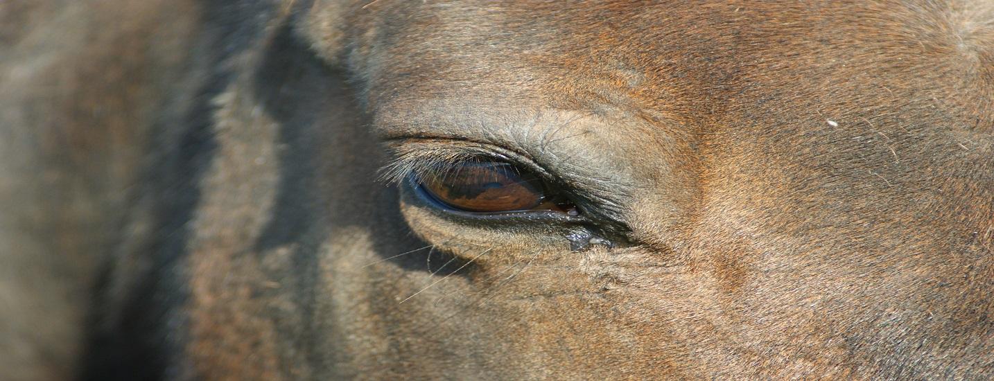 Fütterung alte Pferde