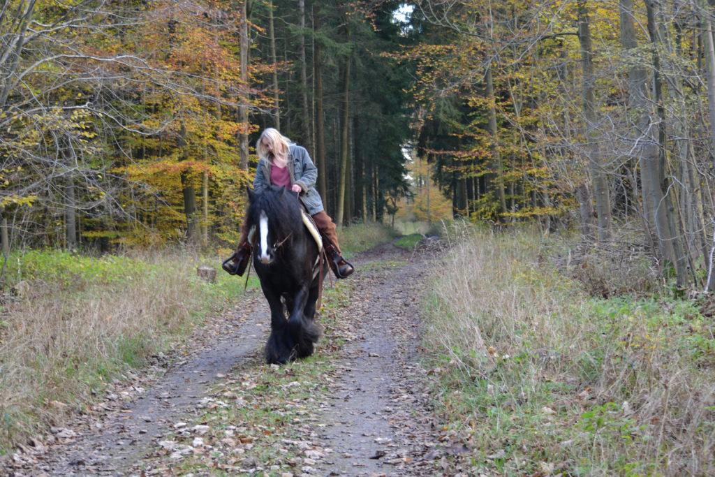 Lahmheiten Pferde