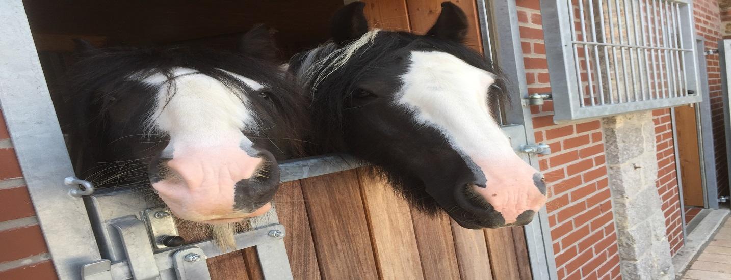 Pferde Futterberatung