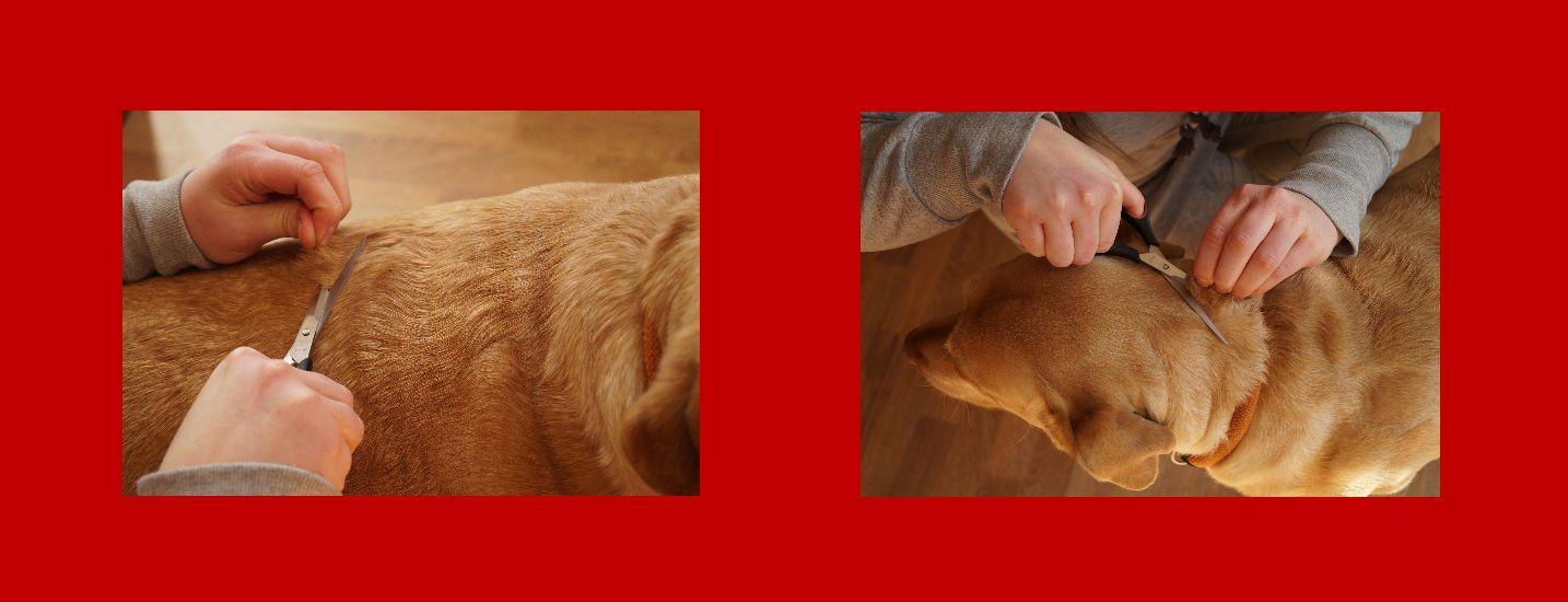 Haaranalyse Pferd-Hund-Katze-Tiere