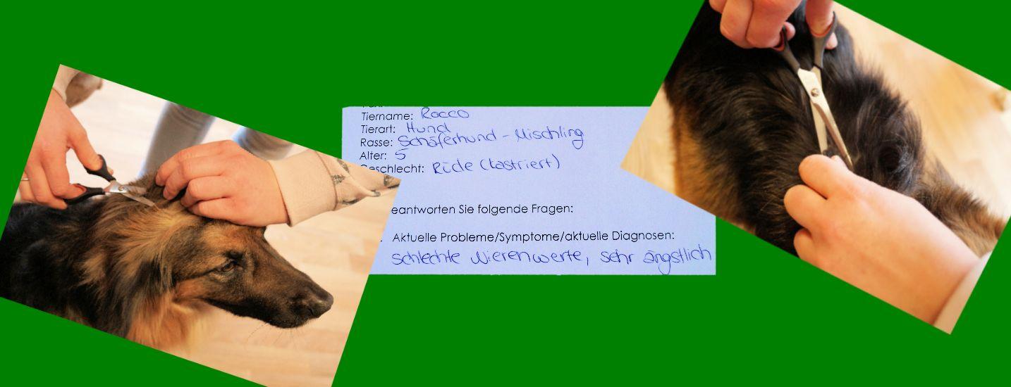 Allergietest Pferd, Hund, Katze, Kleintier