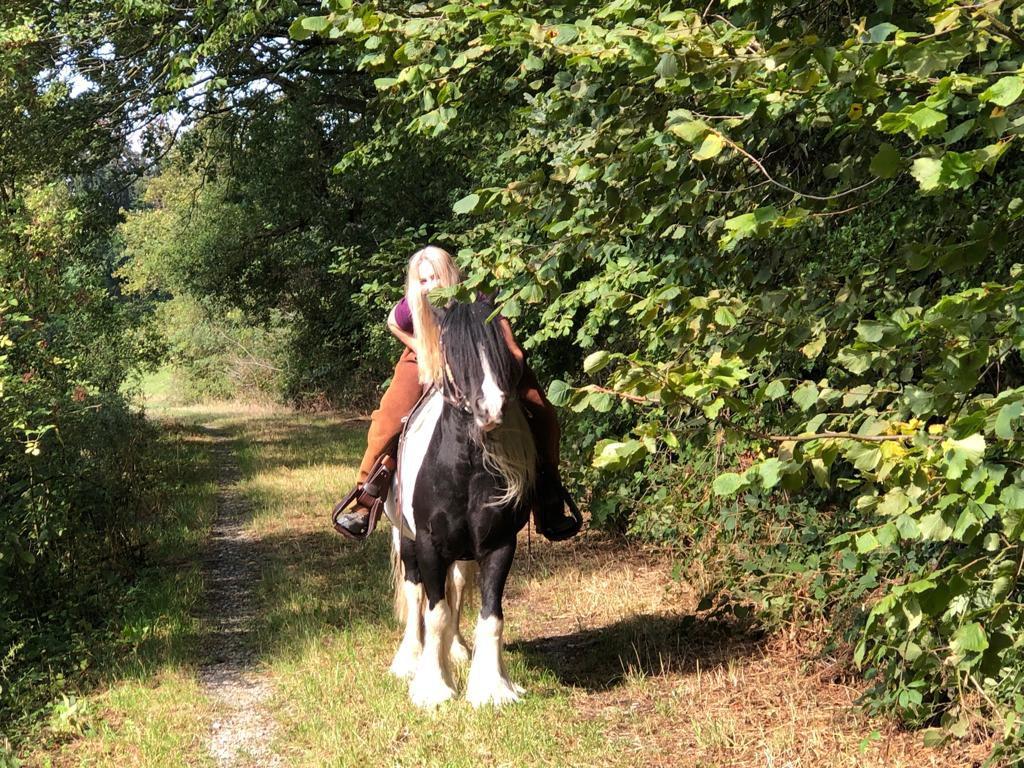 Hufrehe, Husten Pferd, Sommerekzem behandeln