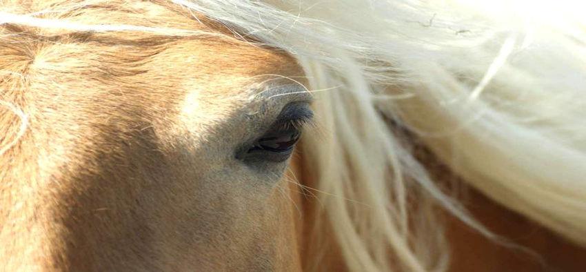 Leber & Nieren Pferd