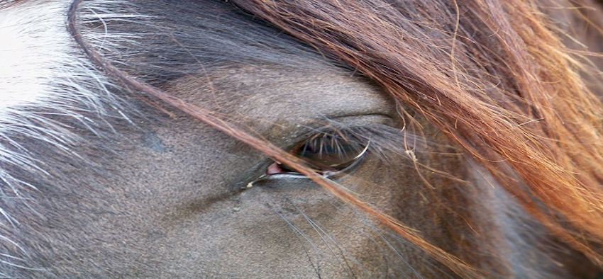 EMS Pferd, Equines metabolisches Syndrom
