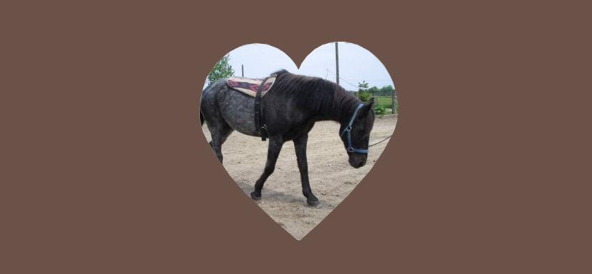 Cushing bei Pferden