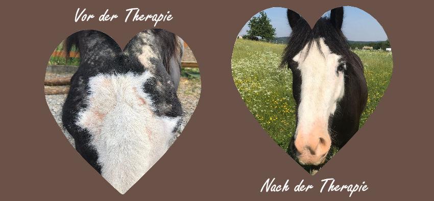 Stoffwechsel und Hautstoffwechsel bei Pferden