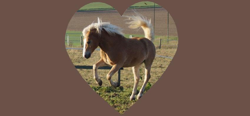 Hormonsystem Pferd