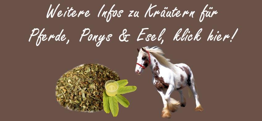 Ergänzungsfuttermittel, Ergänzungsfutter Pferde, Pferdefutter