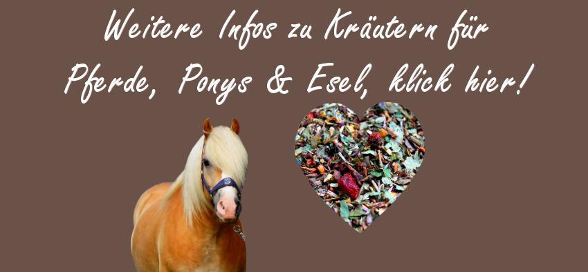 Mineralstoffversorgung Pferde