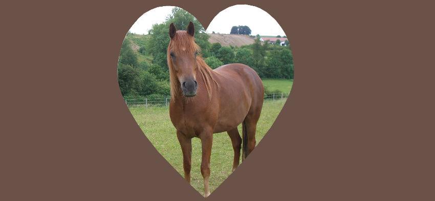 Ängstliche nervöse Pferde Verhaltensstörungen bei Pferden