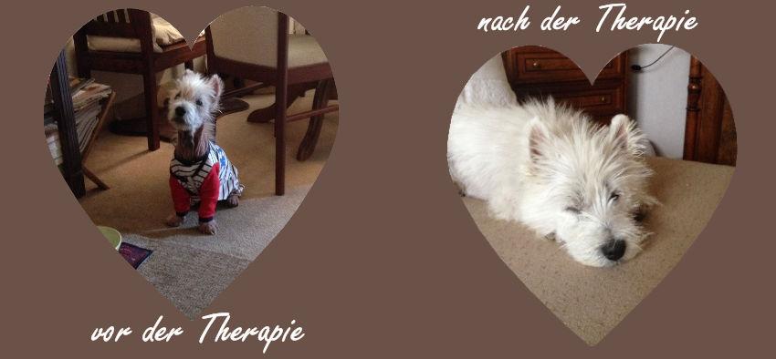 Cushing bei Hunden, Cushing bei Katzen