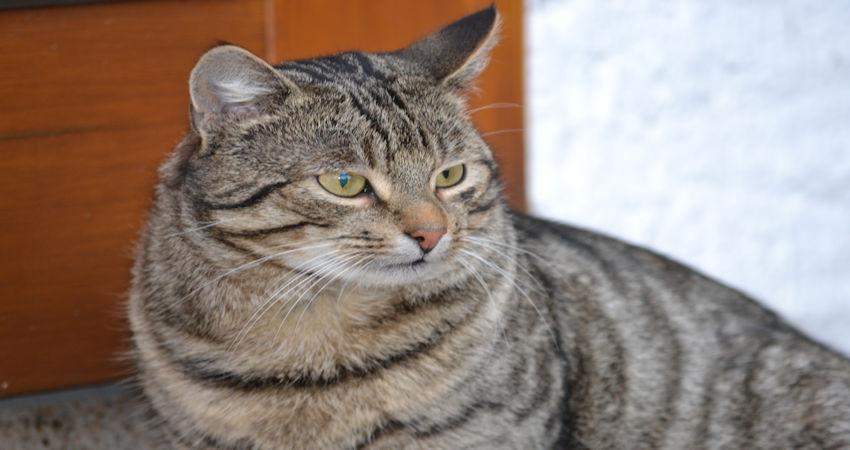 Krebs bei Hunden & Katzen