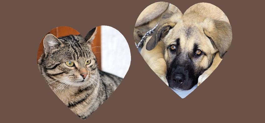 Hot Spots, Atopische Dermatitis bei Hunden und Katzen